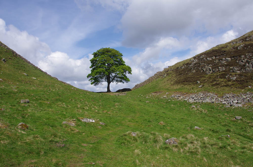 Sycamore Gap - otherwise known as Robin Hood's Tree